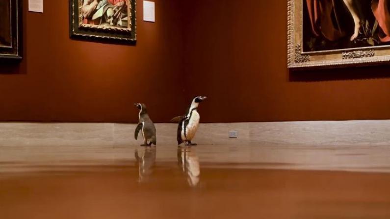 企鹅逛美术馆:最爱巴洛克风格,印象派有点看不懂