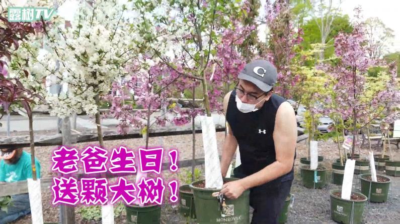 【大树和露露】疫情下的我们一家人:老爸生日记vlog