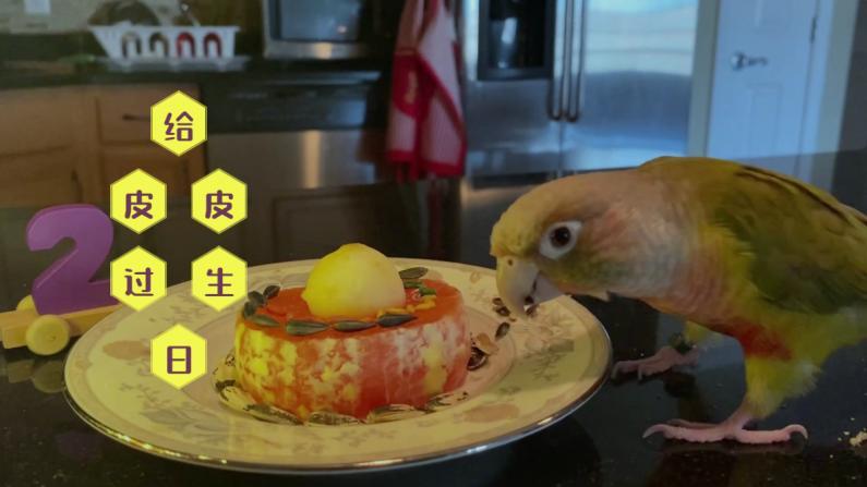 【珊珊和皮皮】鹦鹉过生日 吃什么蛋糕?