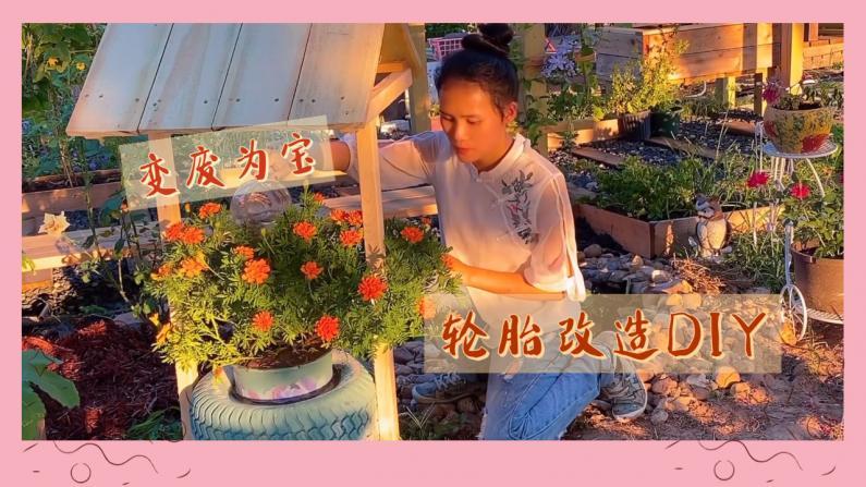 【德州田园生活】变废为宝 旧轮胎改造成花盆