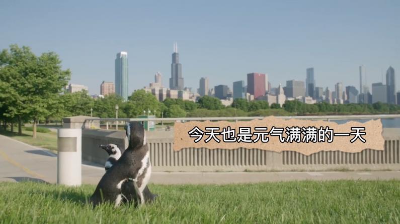 芝加哥网红小企鹅喊你逛水族馆啦~