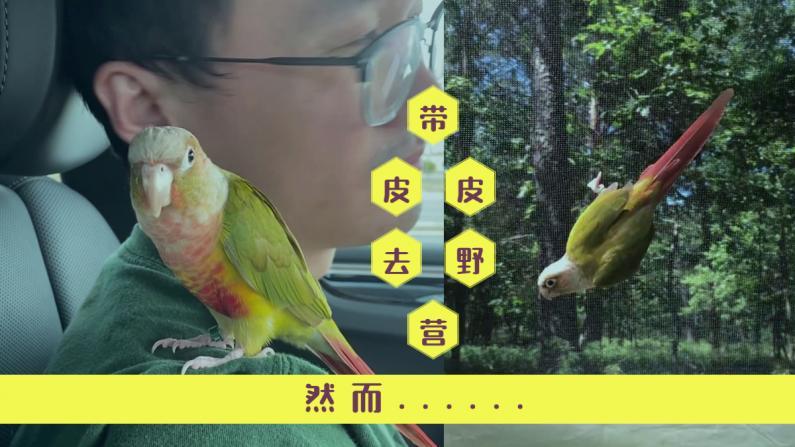 【珊珊和皮皮】动物喜欢大自然?鹦鹉并不这么觉得......