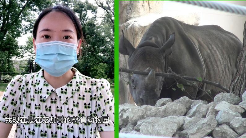 【探访】芝加哥林肯动物园重开 有哪些动物可看?