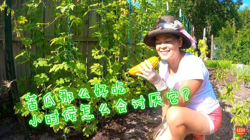 【Lisa的菜园】越长大越爱吃的蔬菜 教你怎么种苦瓜!