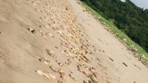 东莞虎门海滩惊现大量猪蹄 多部门介入调查 官方预测20余吨