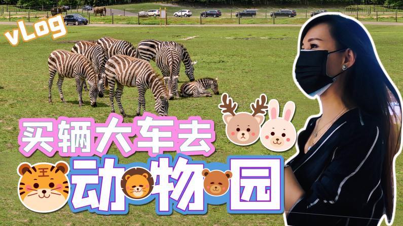 【谭天说地】买了辆大车 带全家去动物园!