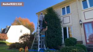 【Rachel生活志】园艺小白变身记:如何修剪灌木和树丛
