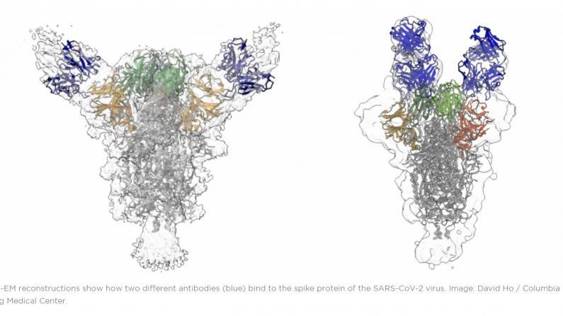 """何大一谈新冠""""抗体鸡尾酒"""" 称免疫系统有""""记忆"""" 二次感染可提供保护"""