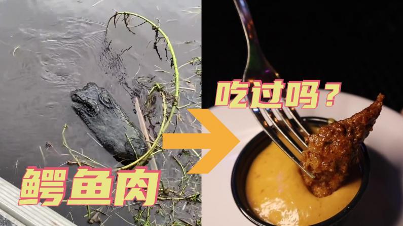 【觅食】鳄鱼肉,到底香吗?