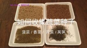 【广东阿姨】学会这一招 你家菜园就有源源不断的种子啦!