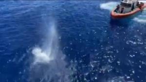 惊险!鲨鱼来了 海岸警卫队员连开数十枪救人