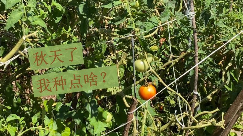 【美国生活365】秋天该种点什么菜?