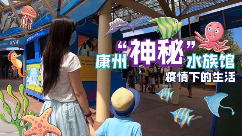 """【谭天说地】疫情下的生活 康州""""神秘""""水族馆"""