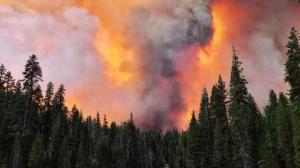 加州山火恶化致大量民众撤离 PG&E发48小时主动断电警告