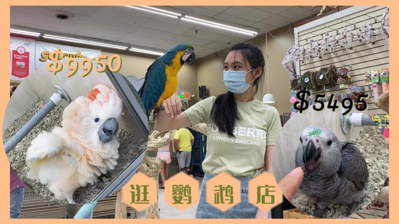 【珊珊和皮皮】带大家看看一万刀的鹦鹉!