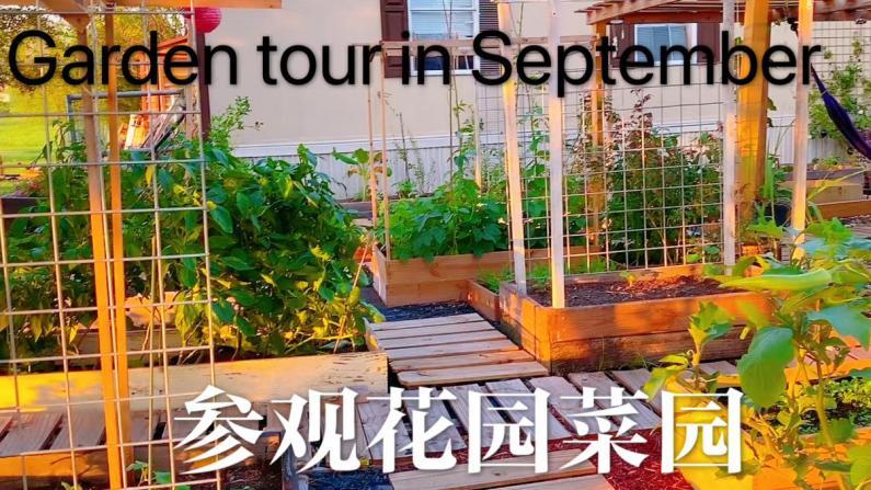 【德州田园生活】九月的菜园花园长成什么样了?
