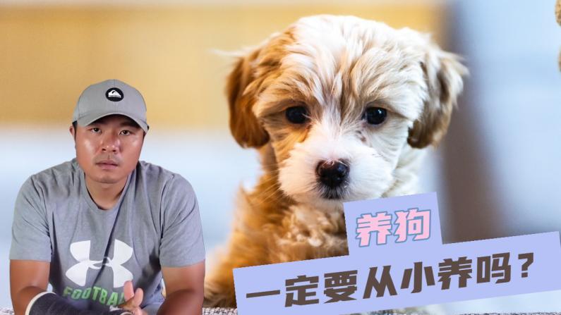 【林小Jim】养狗,一定要从幼犬开始吗?