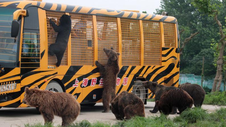 上海野生动物园一工作人员被熊袭击遇难 猛兽区已关闭