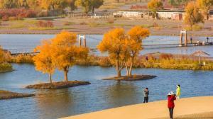 美如画!塔里木河沿岸胡杨林迎最佳观赏季 数万候鸟过境玛纳斯湿地公园