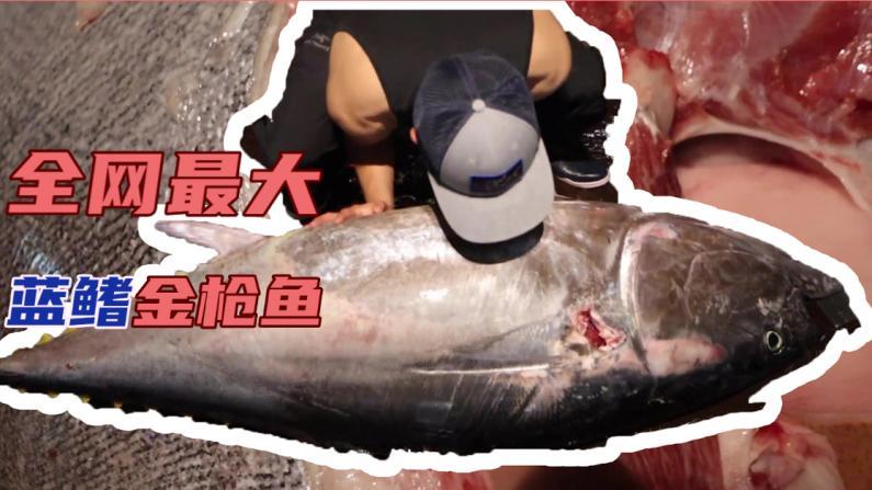 【觅食】$12,000!新鲜捕捞全网最大蓝鳍金枪鱼!