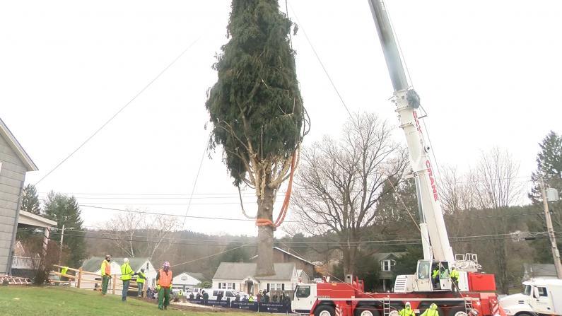 """2020年洛克菲勒中心圣诞树揭晓! 四年前就被""""盯""""上了"""