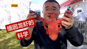 【Derek在纽约】吃龙虾的学问:软壳还是硬壳?