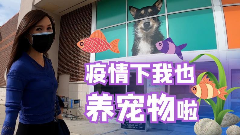 【谭天说地】疫情下我也养宠物啦! 一起逛逛宠物商店吧