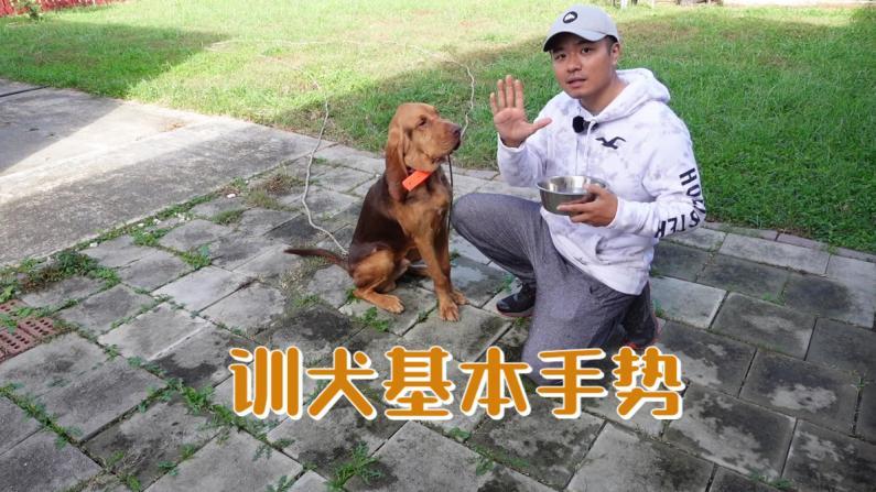 【林小Jim】一看就懂!训练狗狗的基础手势有哪几种?