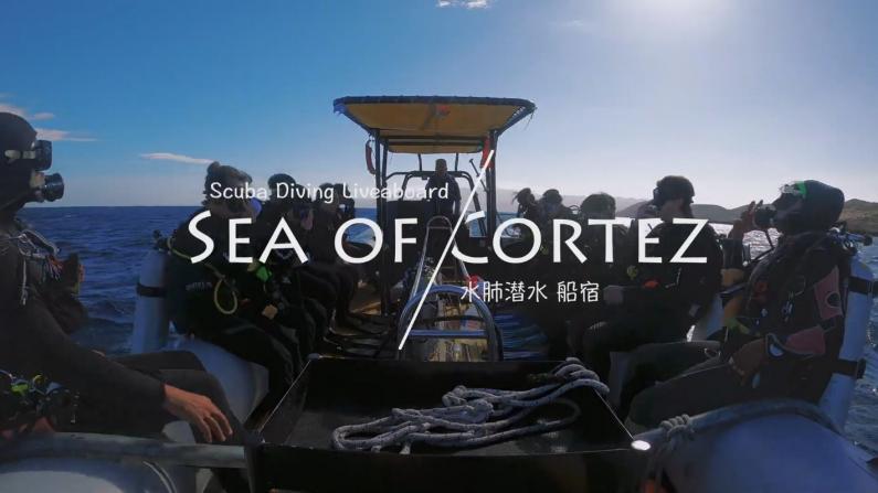 【桑妮歪歪】墨西哥25万元一周的船宿潜水 是什么体验?