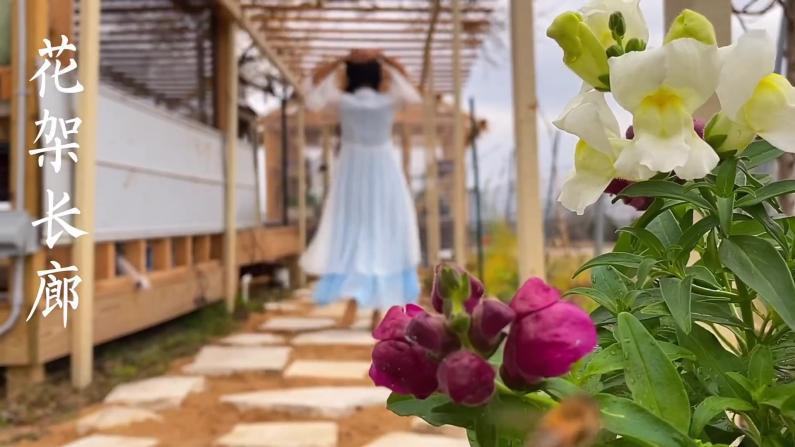 【德州田园生活】继续改造花园 做了个花架长廊