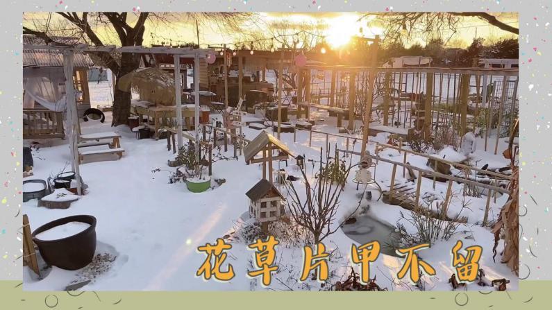 【德州田园生活】好一场大雪 我的花花草草几乎全死了!