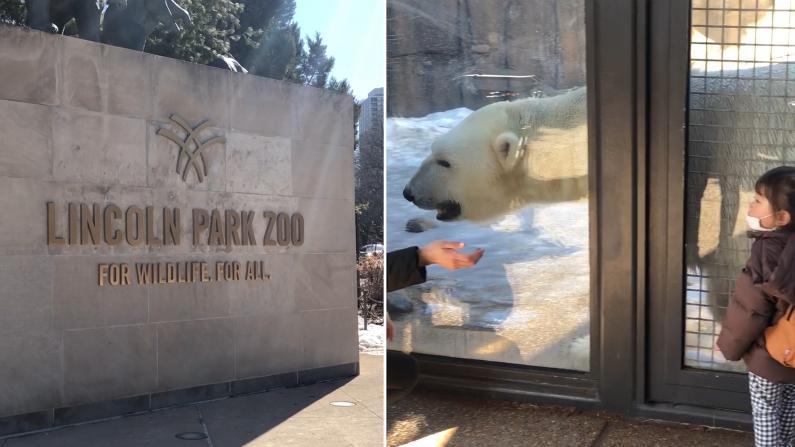 【实拍】芝加哥林肯动物园再次重新开放