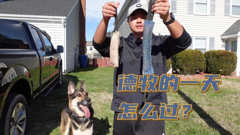 【林小Jim】养狗不容易啊!每天与德牧的训练游戏散步