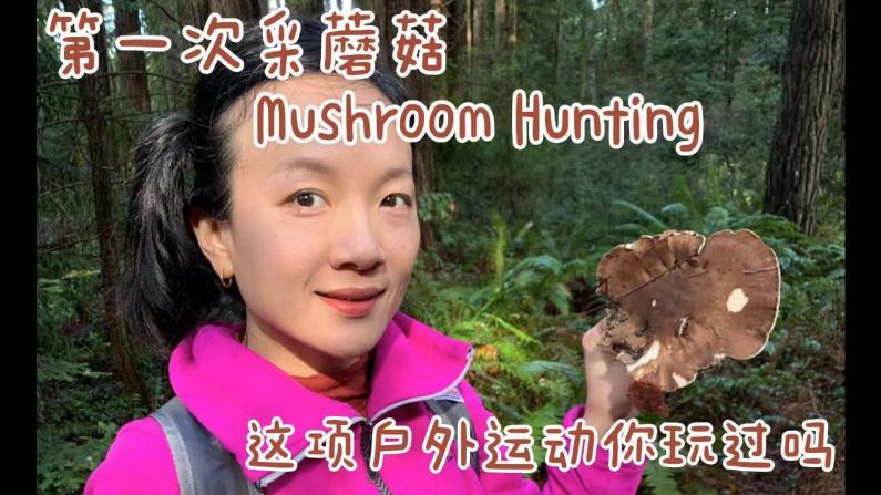 【美天一报】Mushroom Hunting这项户外活动你玩过吗?