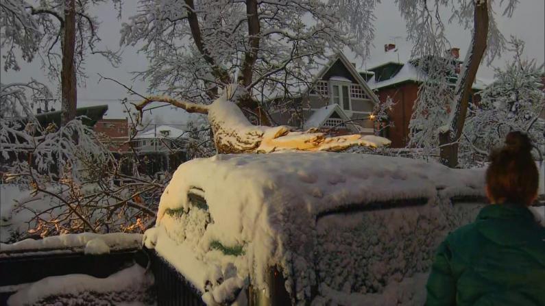 丹佛四月暴风雪 积雪数英寸压垮树木堵路砸车