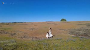 """【硅谷生活】周末好去处:还记得""""鲁冰花""""吗?这片大草原上开满了鲁冰花!"""