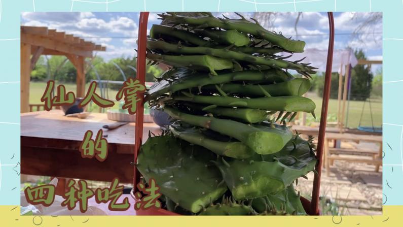 【德州田园生活】仙人掌这么做 简直太好吃了!