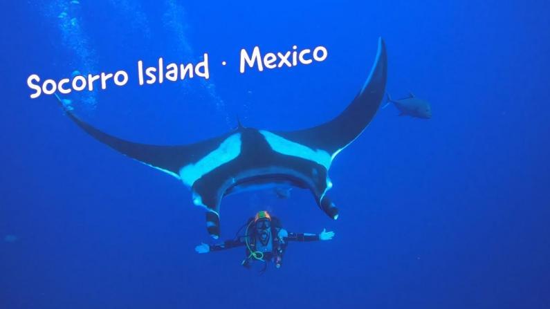 【桑妮歪歪】完爆东南亚的潜水胜地:离美国近 与鲸鲨海豚共舞