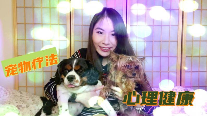 【看见幸福】如何借助动物缓解压力?聊聊宠物疗法