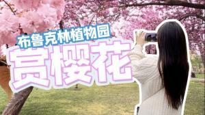 【谭天说地】布鲁克林植物园赏樱花 满园春色关不住