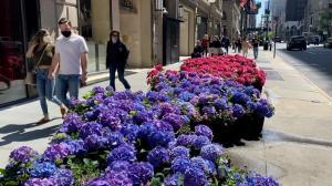春天来了!7千朵鲜花在纽约第五大道盛开 纽约客:太美了