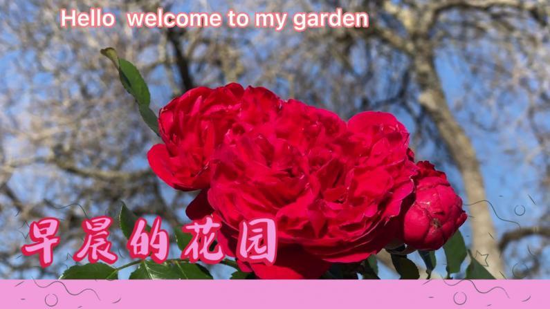 【德州田园生活】早晨走进花园,简直太美了!