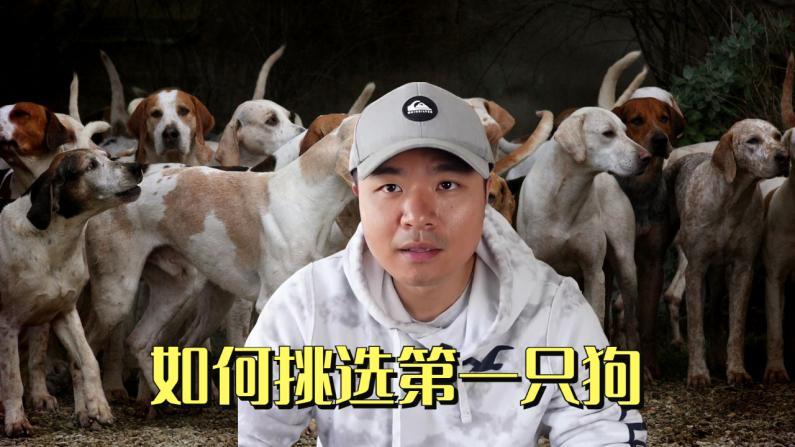 【林小Jim】如何挑选你的第一只狗?