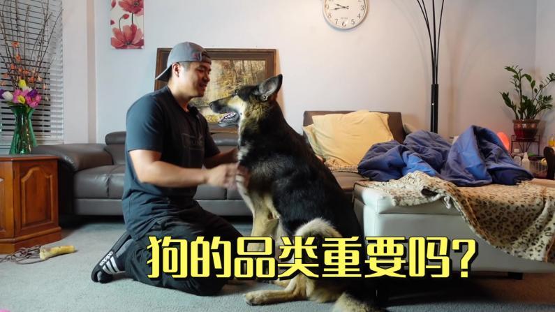 【林小Jim】狗的品种重要吗?每只狗都有自己的灵魂!