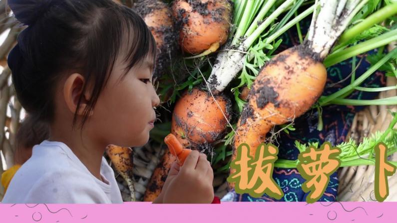 【德州田园生活】大丰收 看我们拔了多少萝卜!