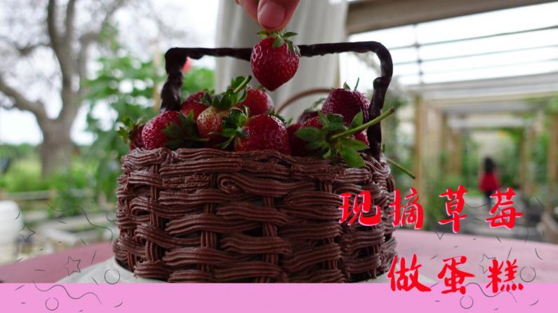 【德州田园生活】最后一波草莓,摘了来做成草莓蛋糕