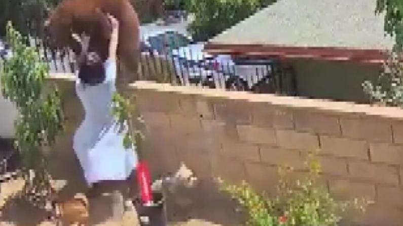 危险动作请勿模仿!加州17岁少女徒手推开大熊救狗