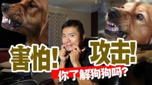 【林小Jim】狗狗害怕都有哪些表现,以及害怕攻击性和攻击性的区别