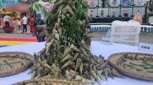 赏舞龙 赛龙舟 粽子宴 各地举办多样端午文化活动