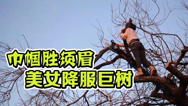 【德州田园生活】怎么做到的?女子,单人,干翻一棵树!